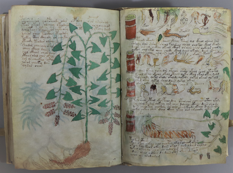 An image from the mysterious Voynitch  - a replica that was recently acquired by BPSC. Features drawings of plant life.