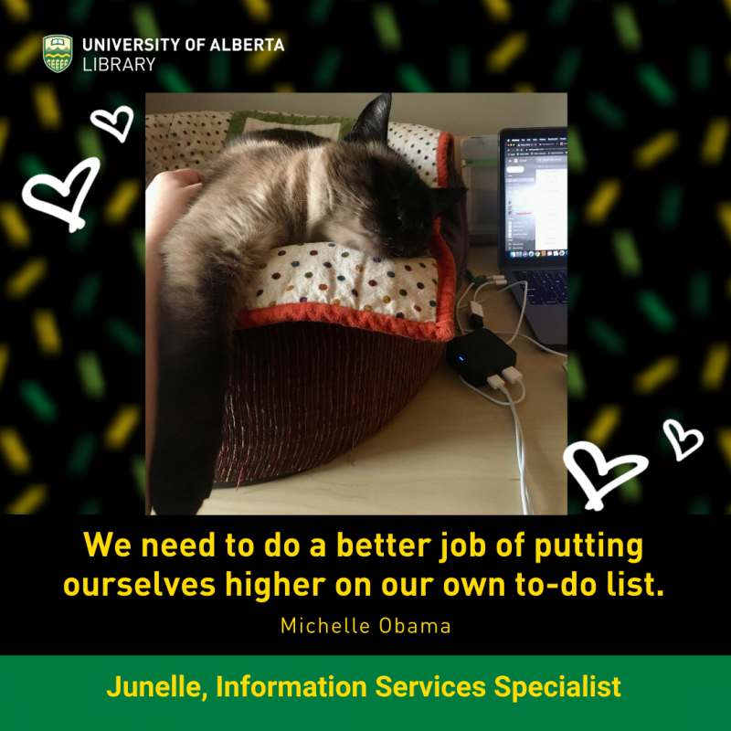 UAlberta ISS Junelle's sleeping siamese cat Mo.