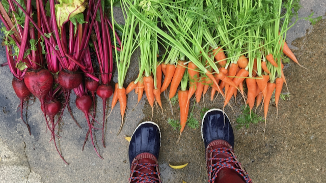 On a wet sidewalk we see bright red beets on the left and bright orange carrots with green stems on the right. At the bottom of the frame are a pair of purple-toed rainboots with pink uppers.